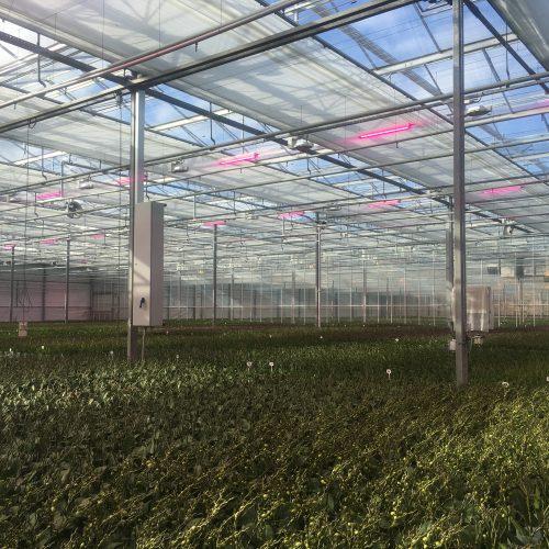 Glas tuinbouw